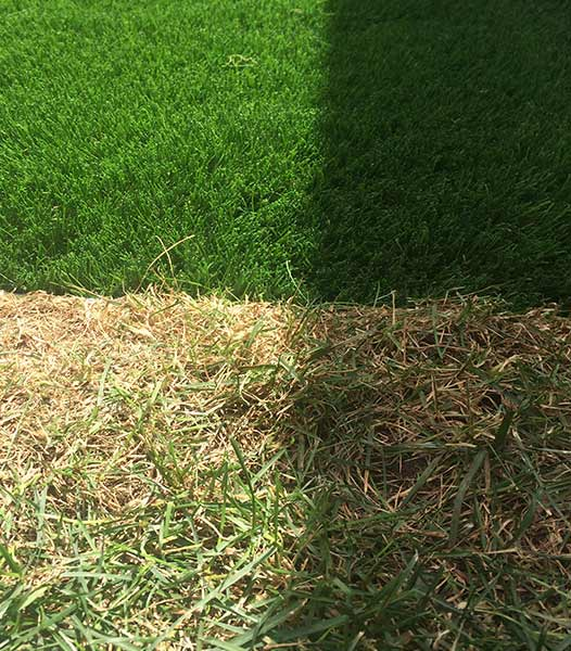 PerfectLawn-artificial-grass-synthetic-turf-canada-GTA-California-Winnipeg-pickup-cheap-grass-price-texas-utah-carolina2