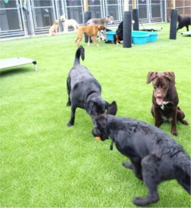 Grass-for-dogs-turf-for-pets-is-artificial-grass-good-for-dogs-03